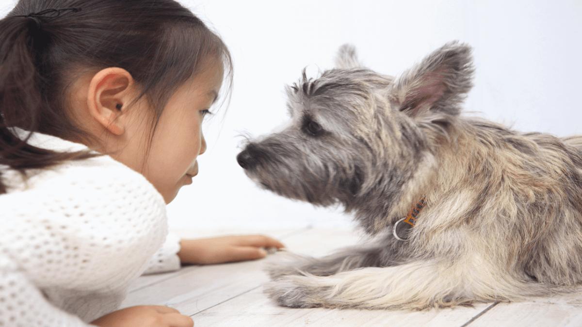 犬 会話 子供