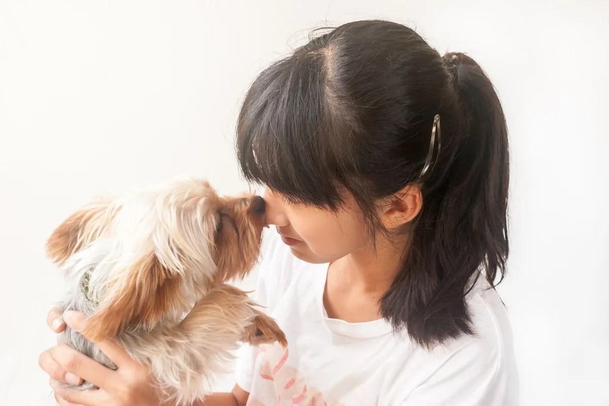 犬 抱っこ 鼻キス