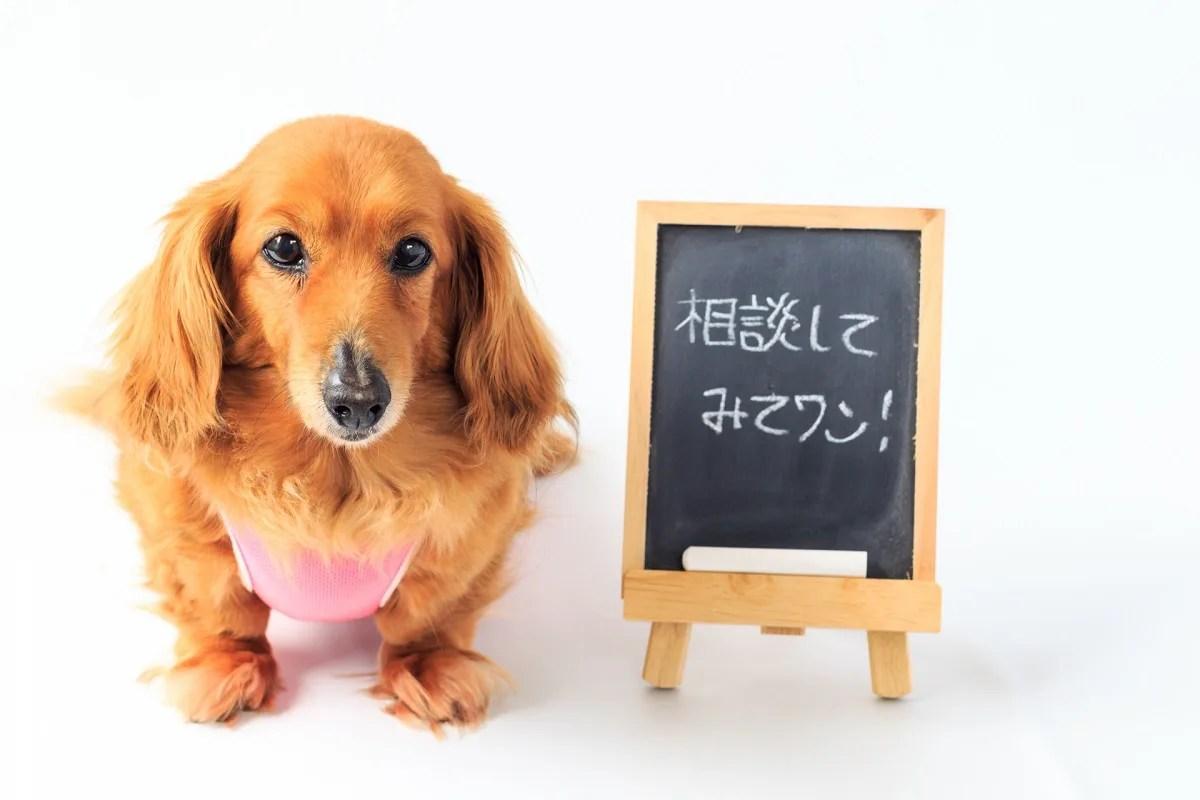 ダックスフンド 黒板 犬 相談