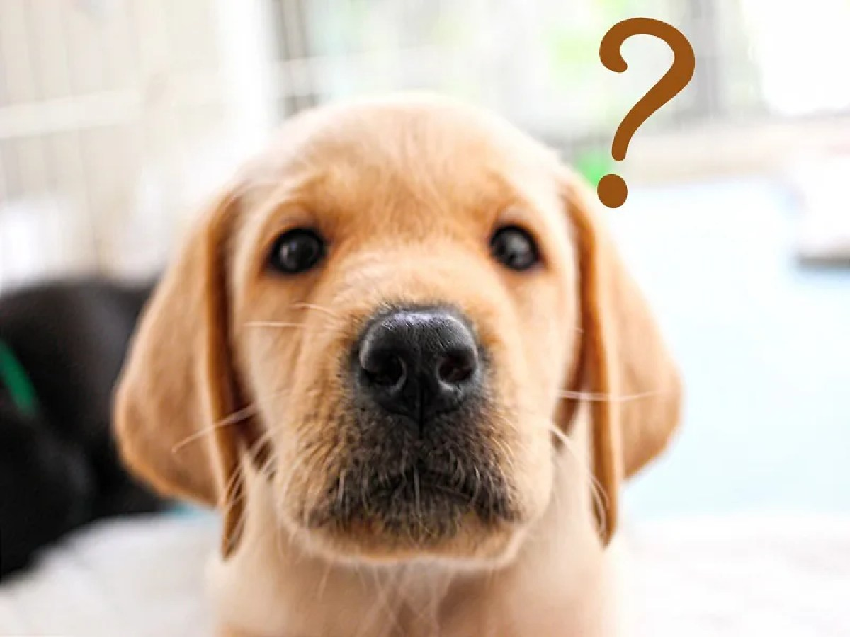 犬 ? 疑問