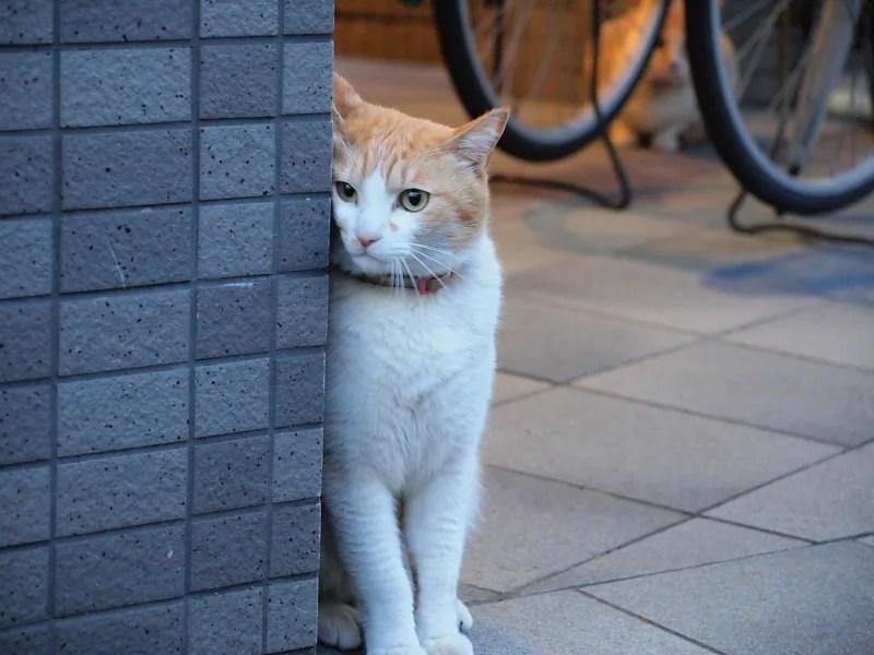 猫 留守番 覗き見