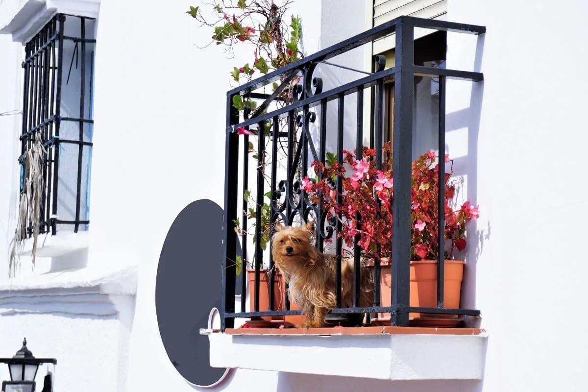 マンションのベランダにいる犬