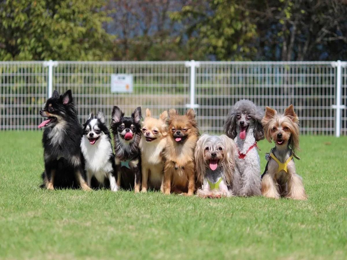 横に並んでいるたくさんの犬たち