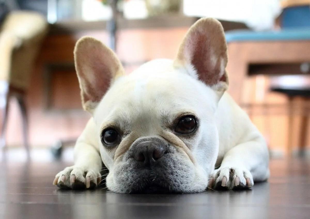 犬 寝る 床