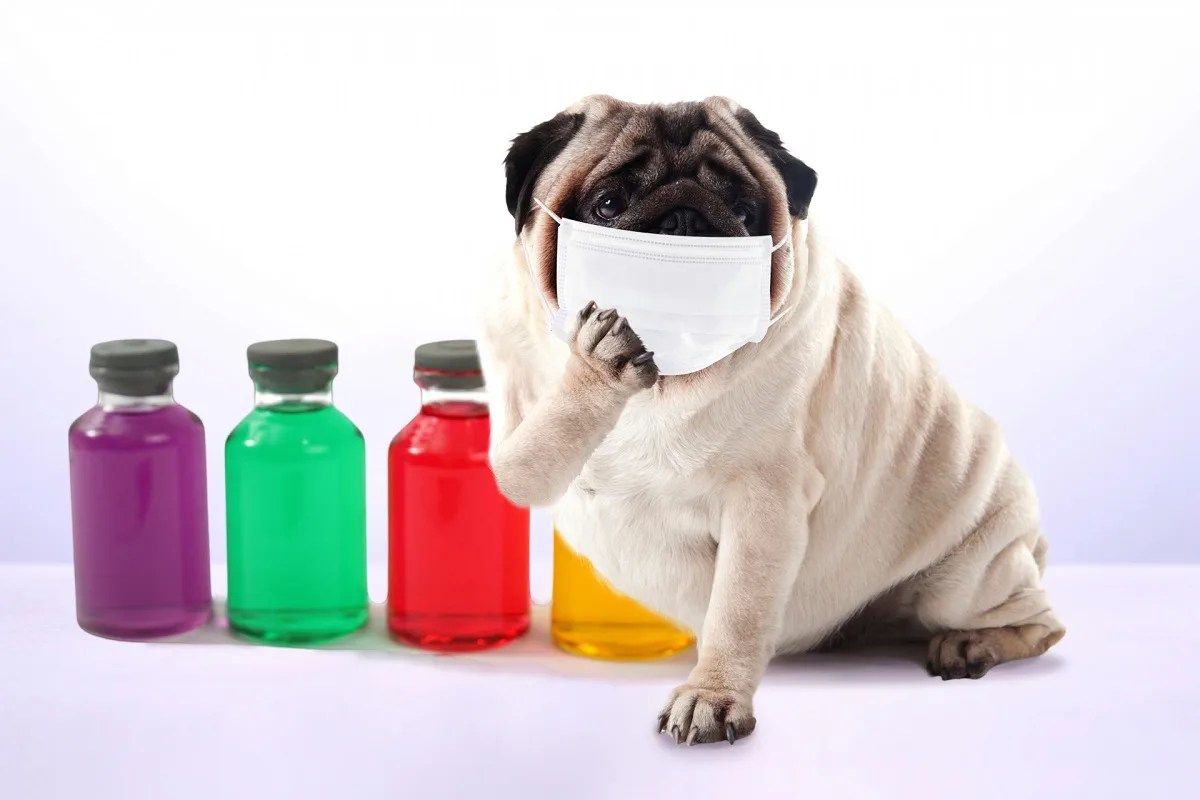 犬 薬 マスク