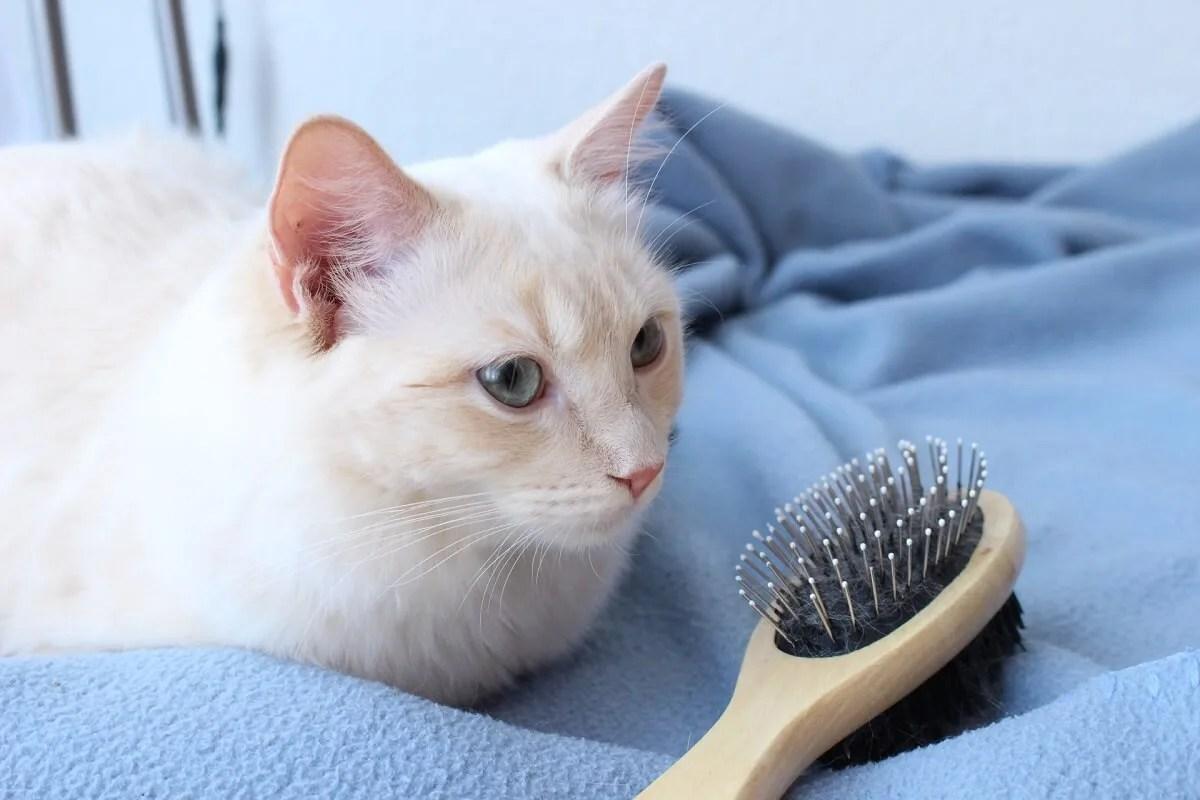 猫 ブラッシング ブラシ