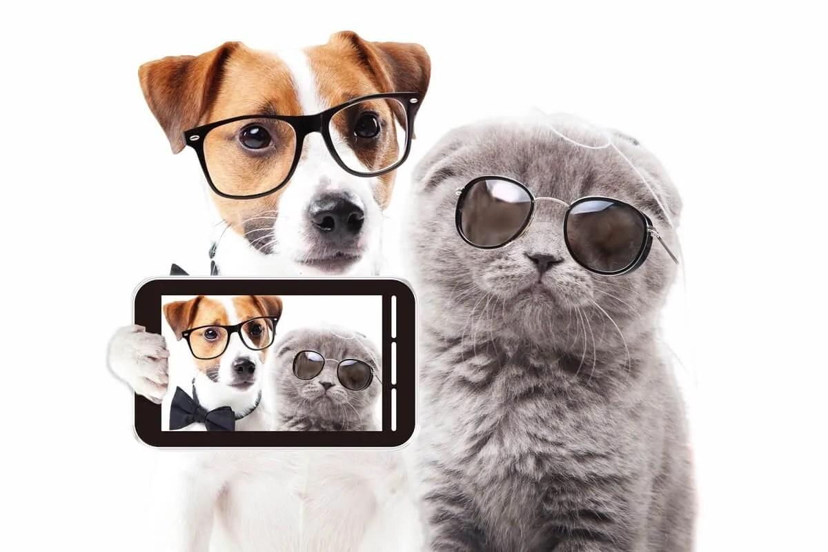 犬 猫 写真