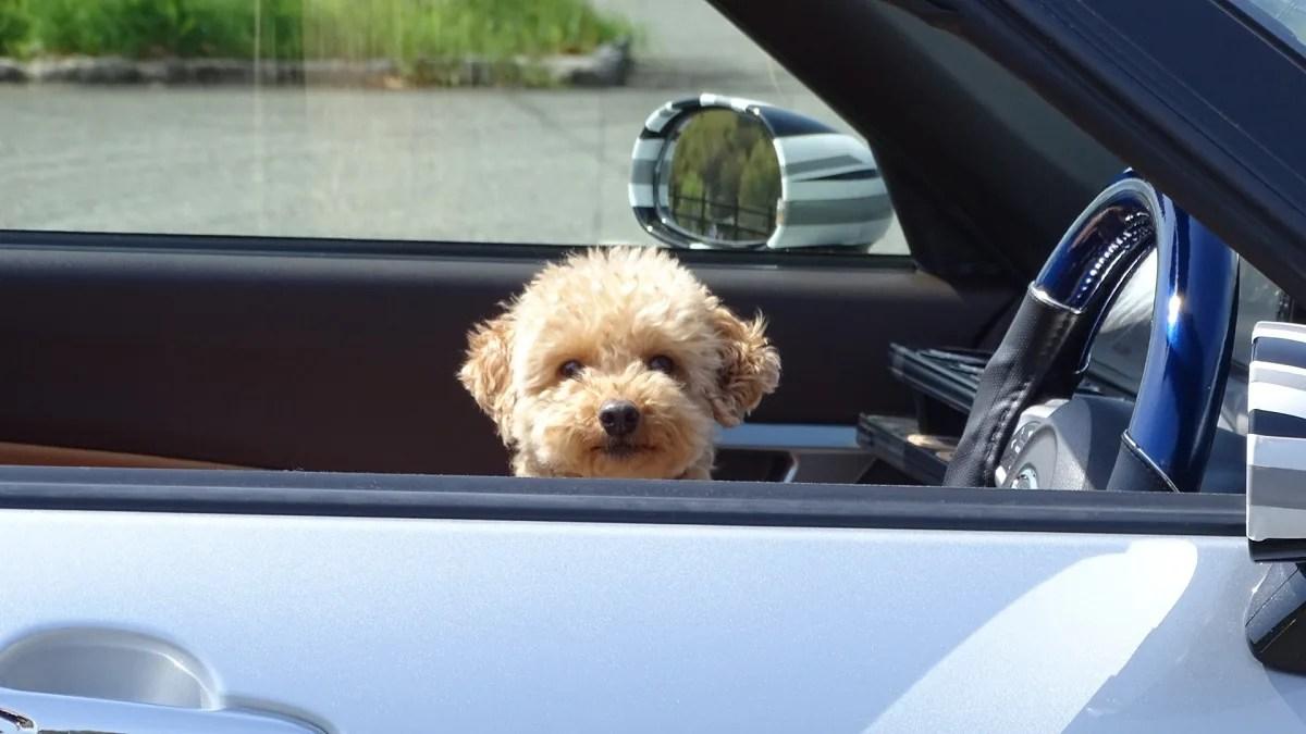 犬 車 ドライブ