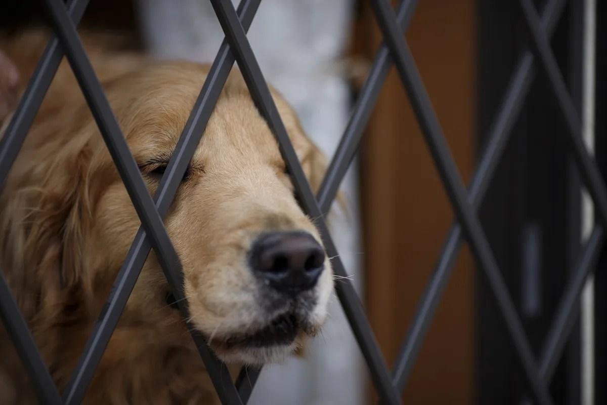 柵に顔を突っ込んでいる犬