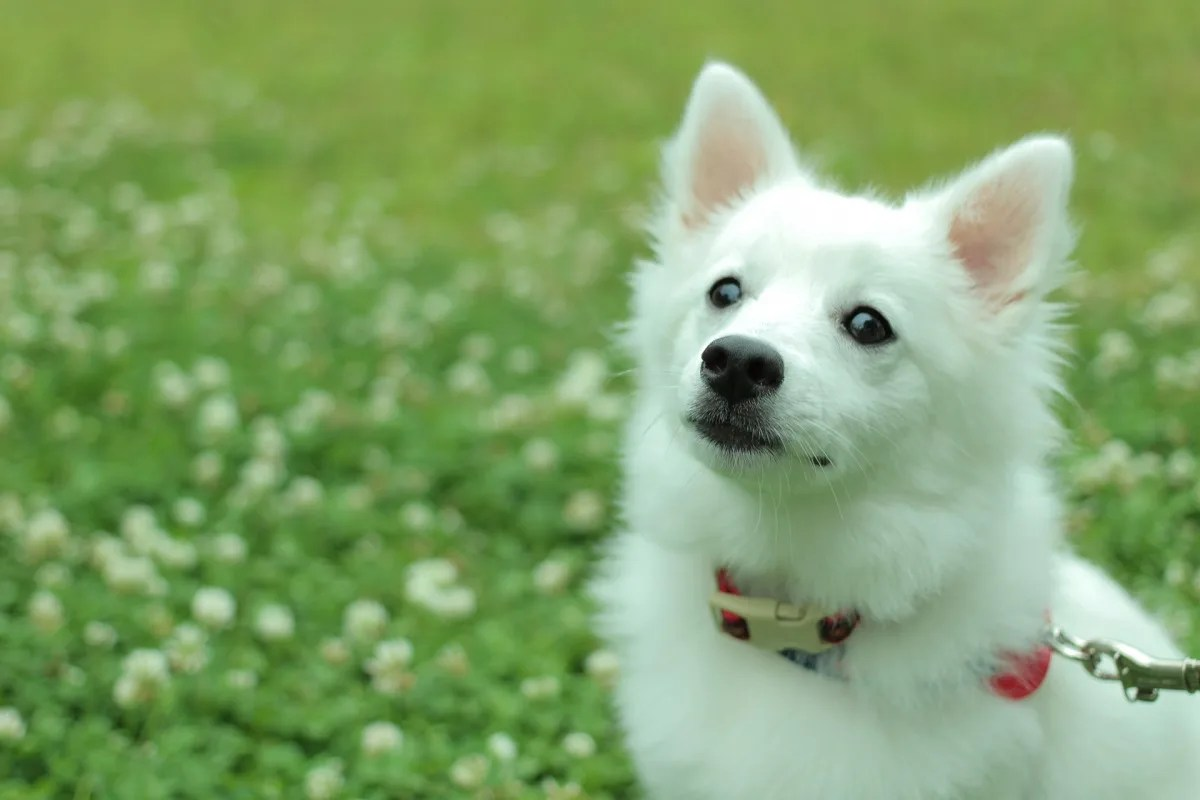 芝生でじっと見つめてくる犬
