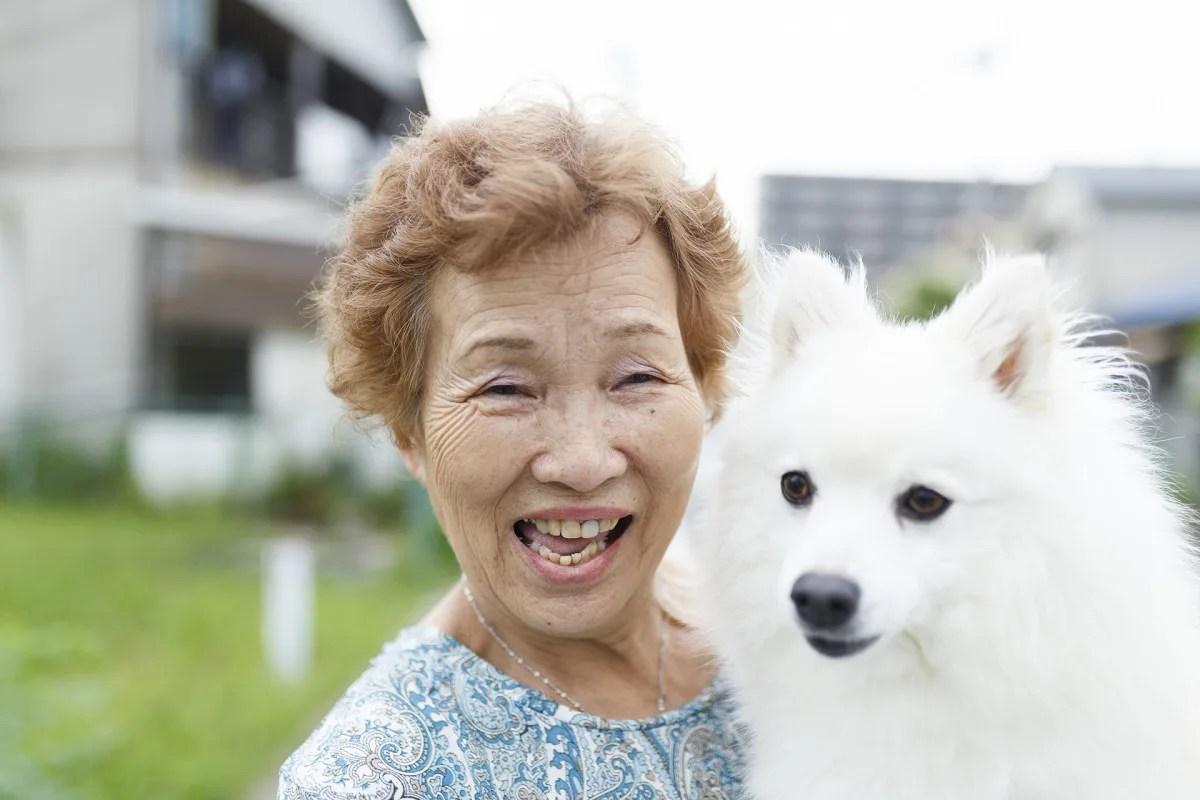 高齢の女性に抱っこされているスピッツ犬