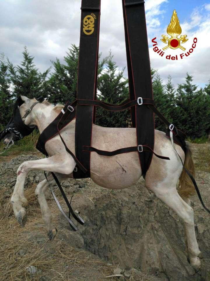 Cavallo salvato dai vigili a Steccato di Cutro