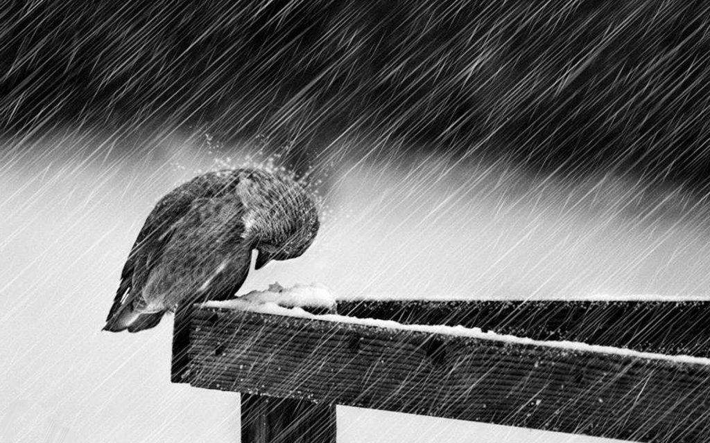 Pioggia incessante, si aspetta prima di riaprire le scuole