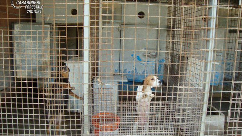 Allevamento illegale di cani a Rocca di Neto