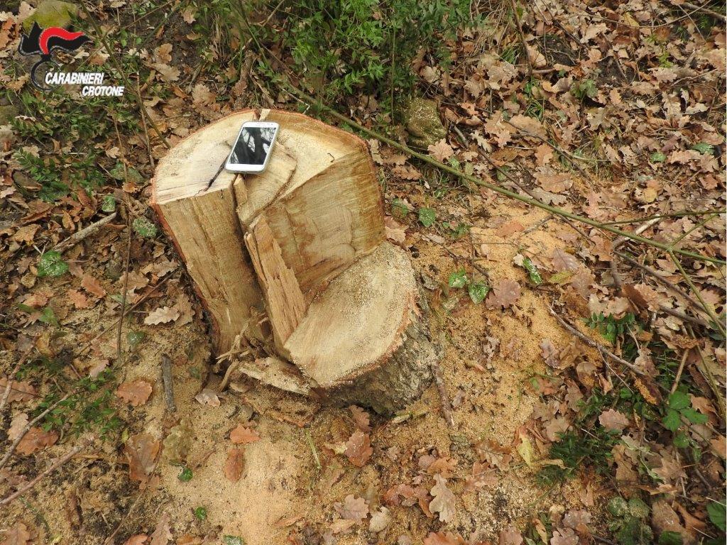 Sorpresi a rubare legna, 3 arresti
