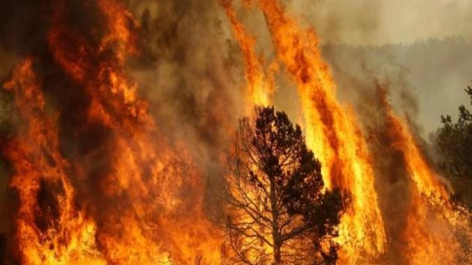 Incendio in località Santa Spina