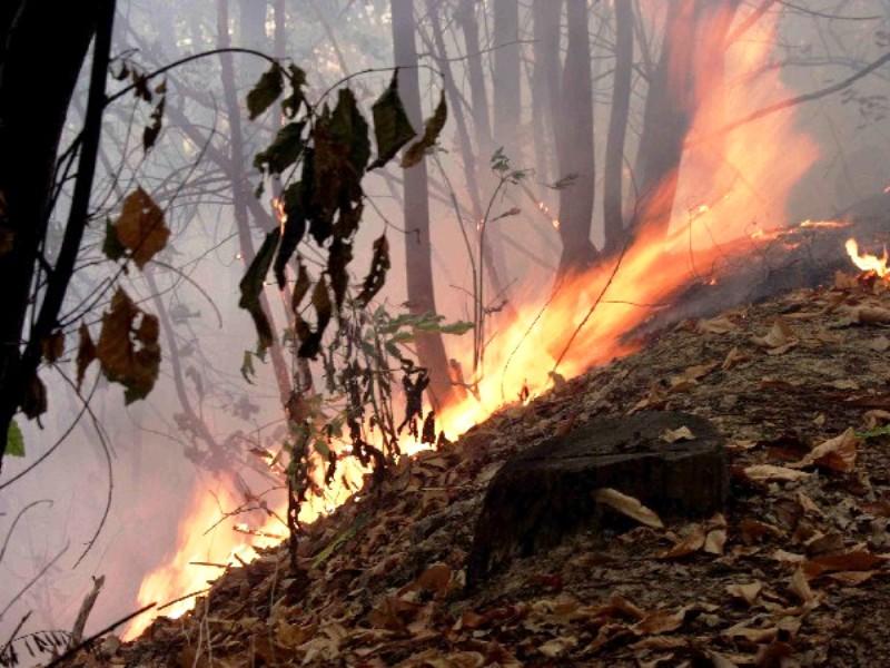 Petilia Policastro. Incendio in località san Vincenzo