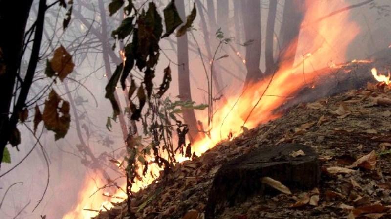 Primi incendi della stagione nella provincia di Crotone