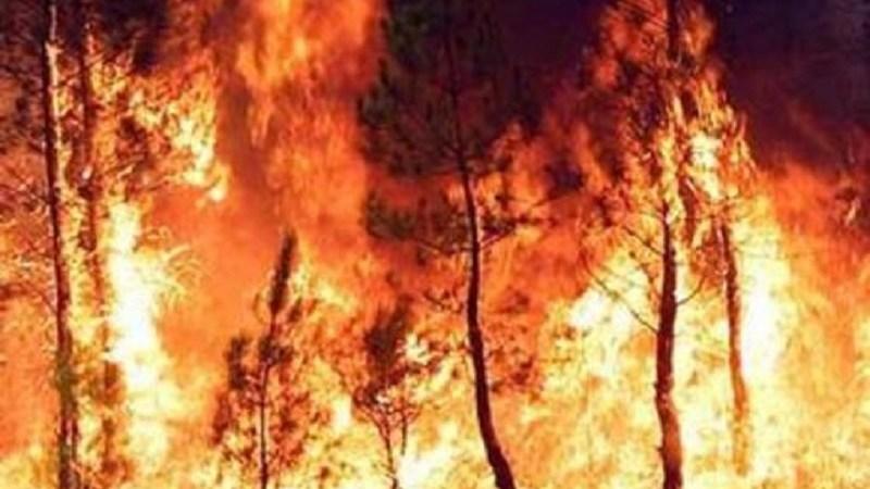 La Calabria va a fuoco e Legambiente accusa la mancata prevenzione