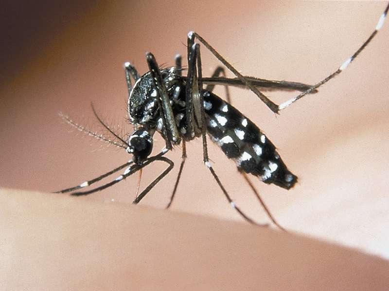 Allarme zanzare anche nella provincia di Crotone