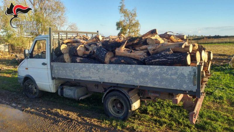 Sorpreso a rubare legna nella pineta di Sovereto