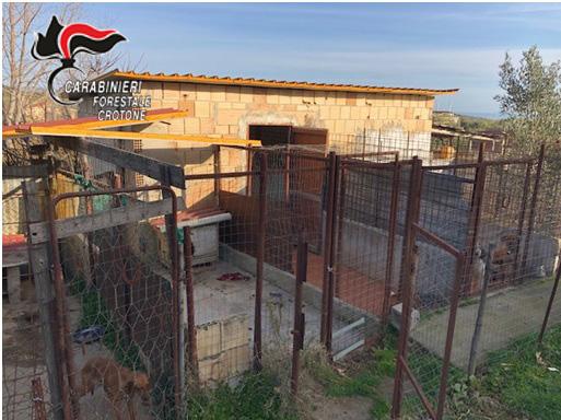 Maltrattamenti animali: Canile abusivo a Crotone
