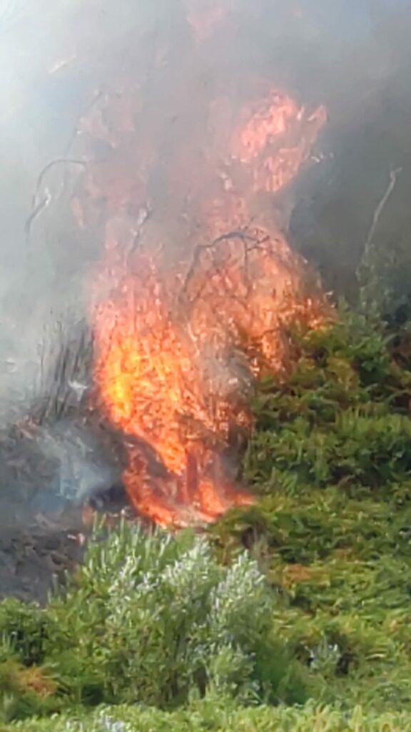 """Incendi in Calabria, Legambiente: """"Manca organizzazione e la Regione viene commissariata anche sugli incendi boschivi!"""""""