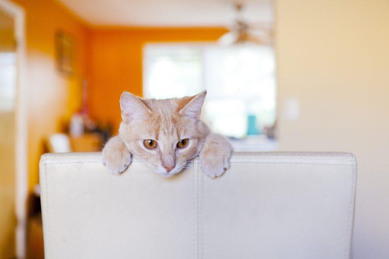 cat destroying furniture