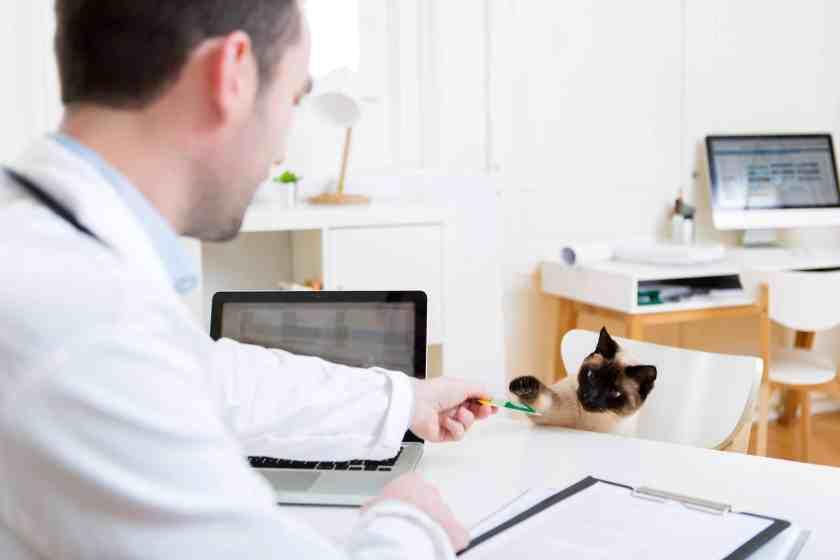 cat veterinarian bill