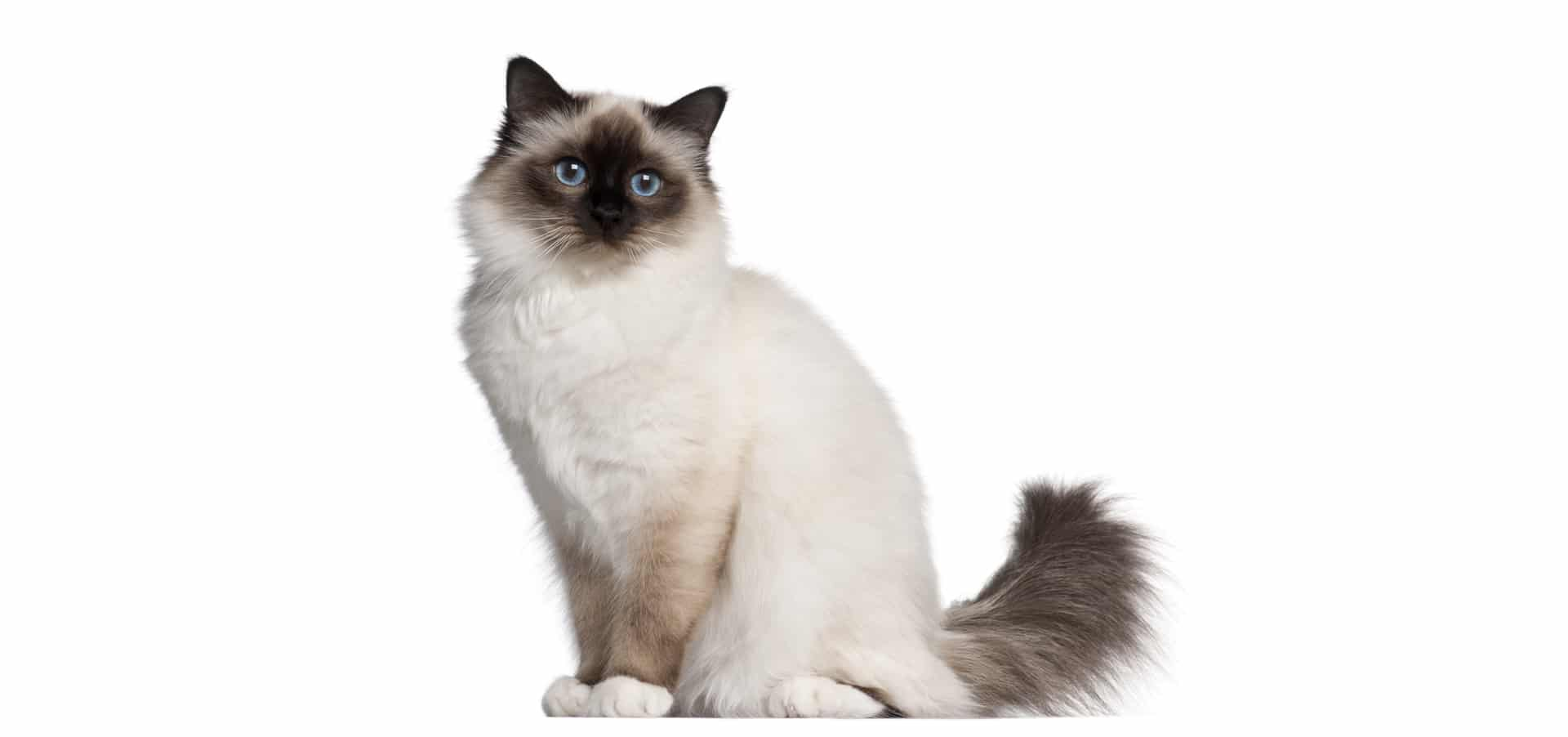 birman-cat-insurance