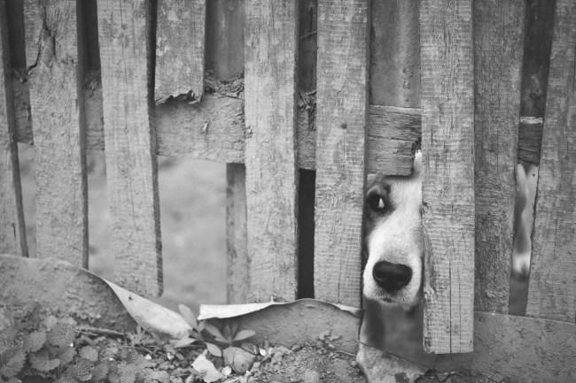 dog-1210565_1920