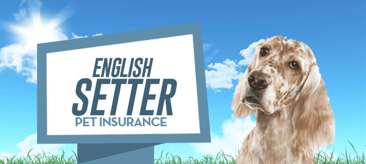 english setter pet insurance