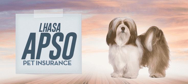 lhasa apso pet insurance