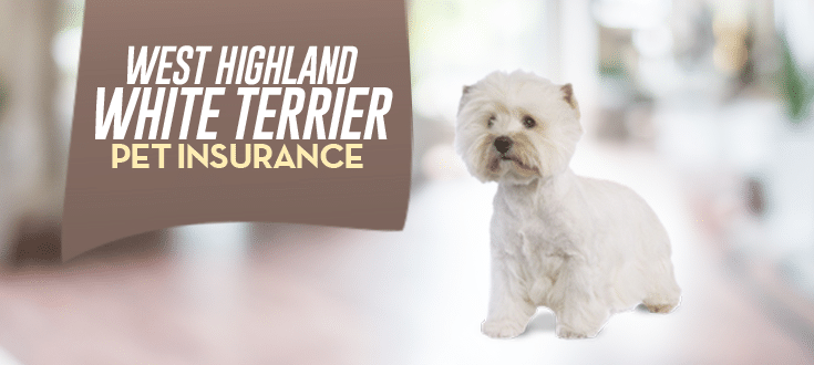 west highland white terrier pet insurance