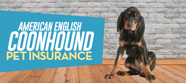 american english coonhound pet insurance