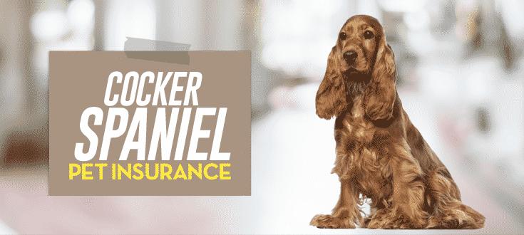 cocker spaniel pet insurance