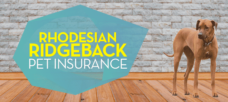 rhodesioan ridgeback pet insurance