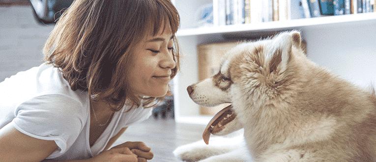 pet insurance basics