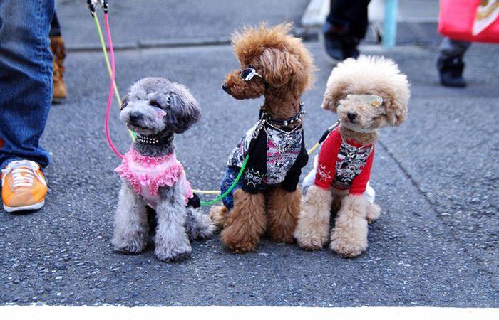 dog insurance ca