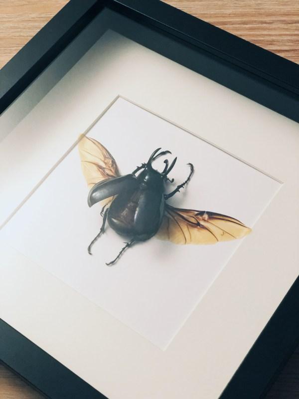 insectes-décoration-scarabée-achat