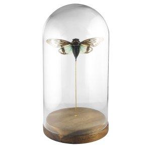 insectes sous cadre