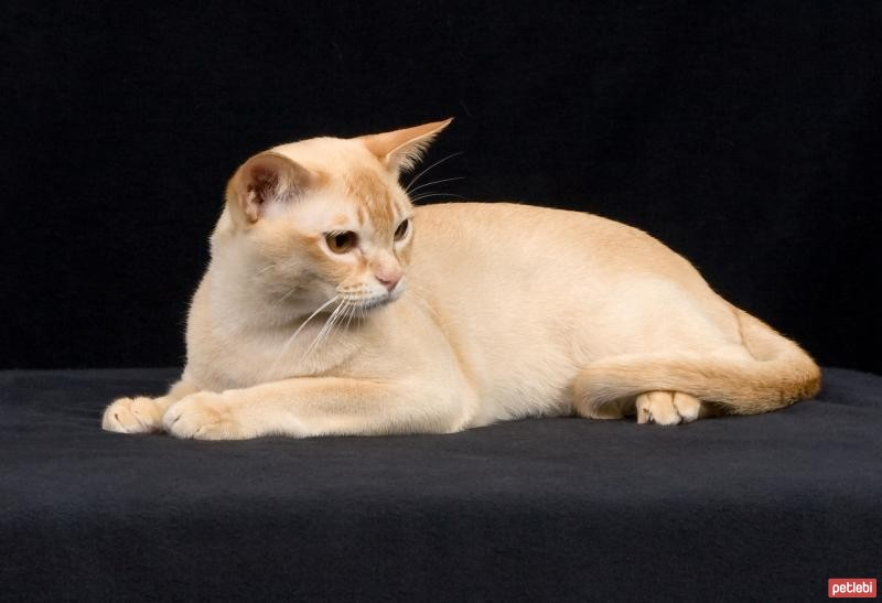 29 - Feline crap parasite may change human brains to lessen fear, contemplate finds