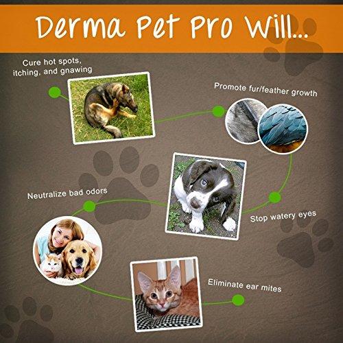 HOT SPOT TREATMENT FOR DOGS HOUSE CATS Amp BIRDS PROBIOTICS