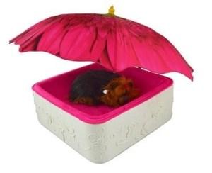 Little Pink Flower Bed