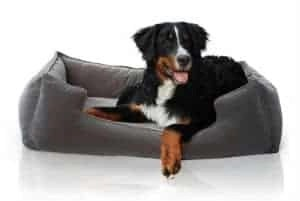 Petsbao Premium Orthopedic Dog Bed Lounge With Solid Memory Foam