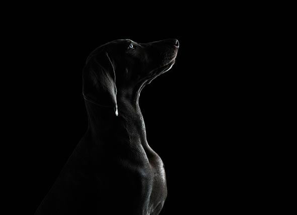 canine eye diagram right electric dryer cord wiring how dogs eyes are different from human petmd
