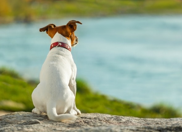 Sorrow Wallpapers With Quotes Anal Gland Cancer In Dogs Petmd