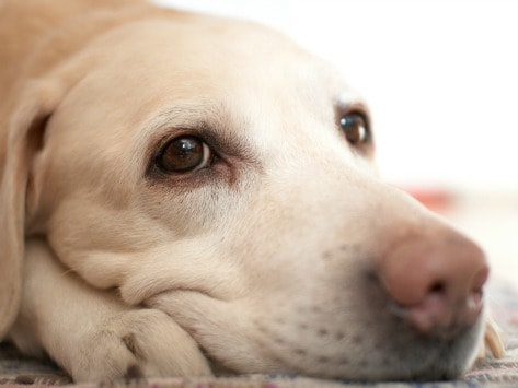 can dogs get depressed