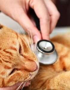High blood sugar in cats also petmd rh
