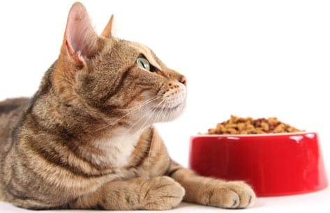 cat, food bowl, cat food